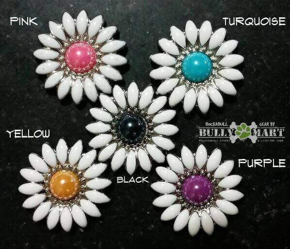 daisy-flower-color-options.jpg